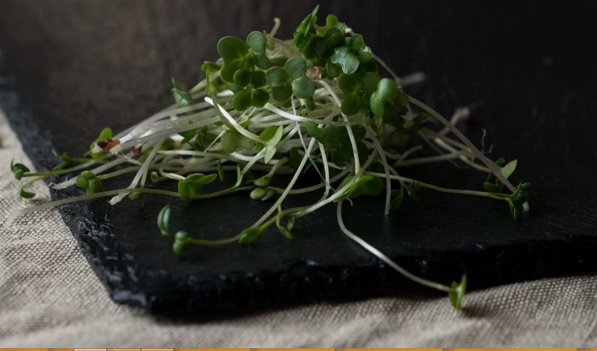 Raw Mung bean sprouts